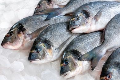 Перевозки рыбы упали