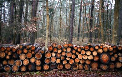 Через порты Приморья расширяется география поставок экспортной лесопродукции